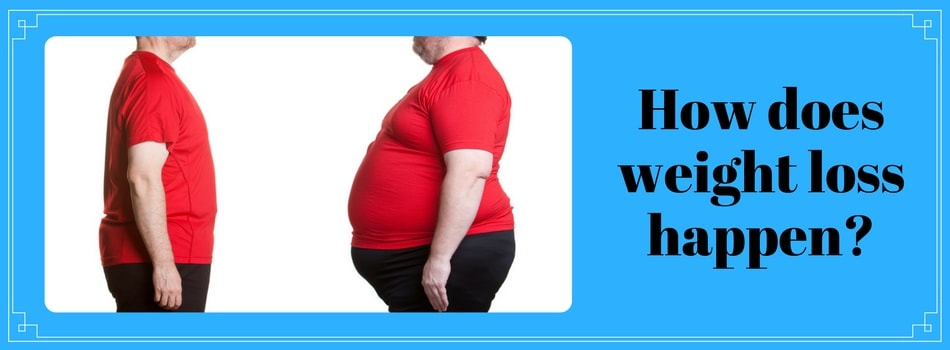 """The image comes with a note question """"How Weight Loss Happens"""" and the content below answers it."""
