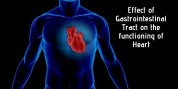 Effect of GIT on the functioning of Heart